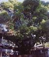 Fujirokushosengen