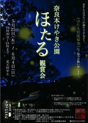 170426hotaru_keyakikouen01