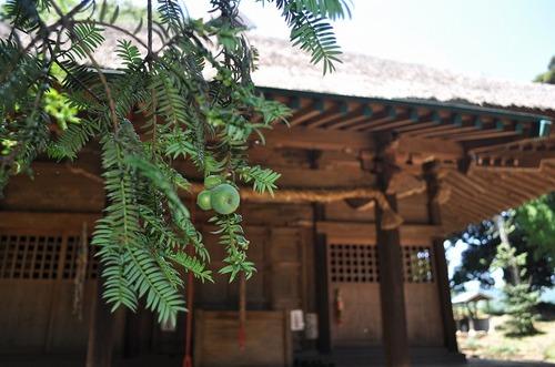 沼津「真夏の赤野観音堂」